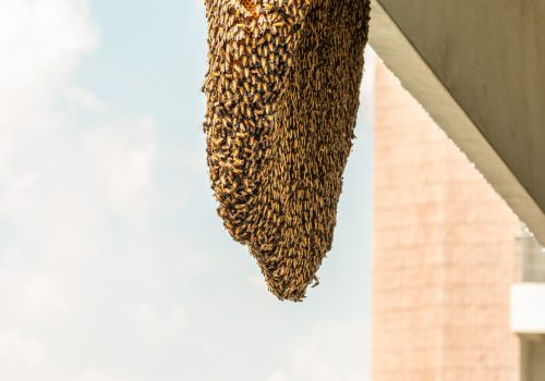 Swarm of bees, Beehive, Honeycomb is clinging on the big building, on blue sky background, with space for text.