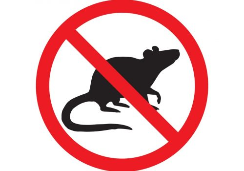 vector-black-rat-mouse-silhouette-crossed-in-red-circle-vector-id1196111908