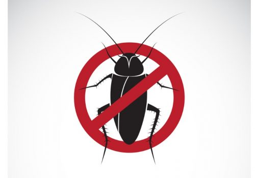 vector-of-cockroach-in-red-stop-sign-on-white-background-no-cockroach-vector-id908909712 (1)